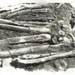 Bellanbendipelessa-Balangoda-Man-P.E.P.-Deraniyagala-Sri-Lanka-Prehistory
