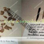 Neravana-Galge-P.E.P.Deraniyagala-Prehistory-Sri-Lanka-Archaeology.lk_
