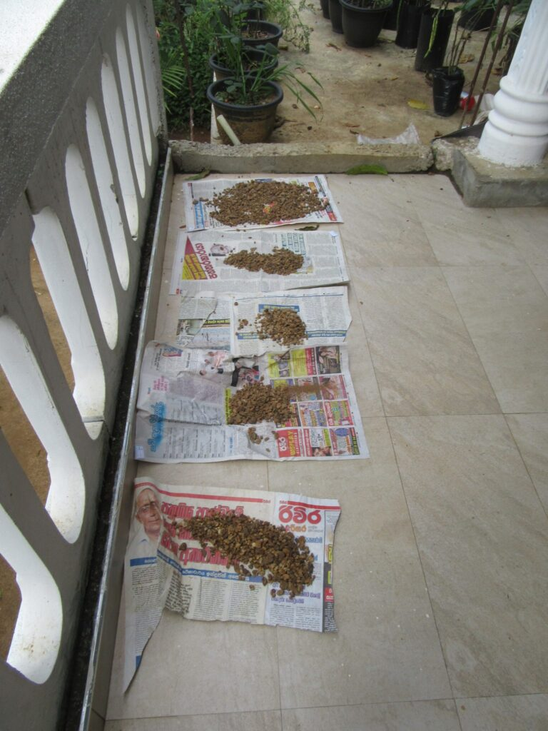 Drying of the soil after wet sieving